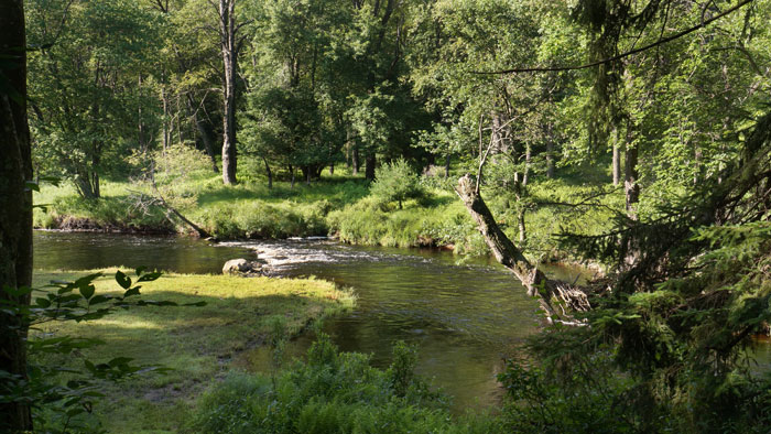Flyfishing the stretch for Pa fishing license fees
