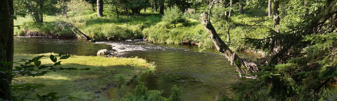The stretch fly fishing club for Fly fishing clubs